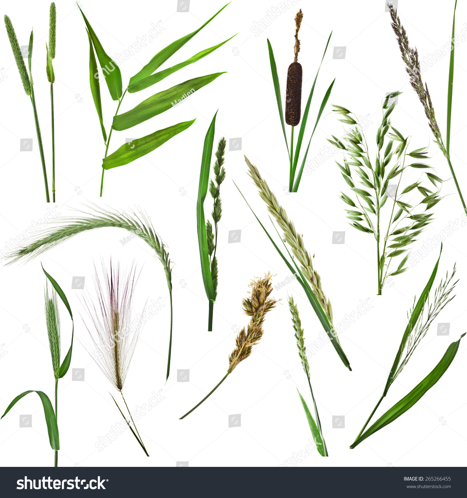 Grass Collection Set Green Reed Plant Stock Photo Edit Now