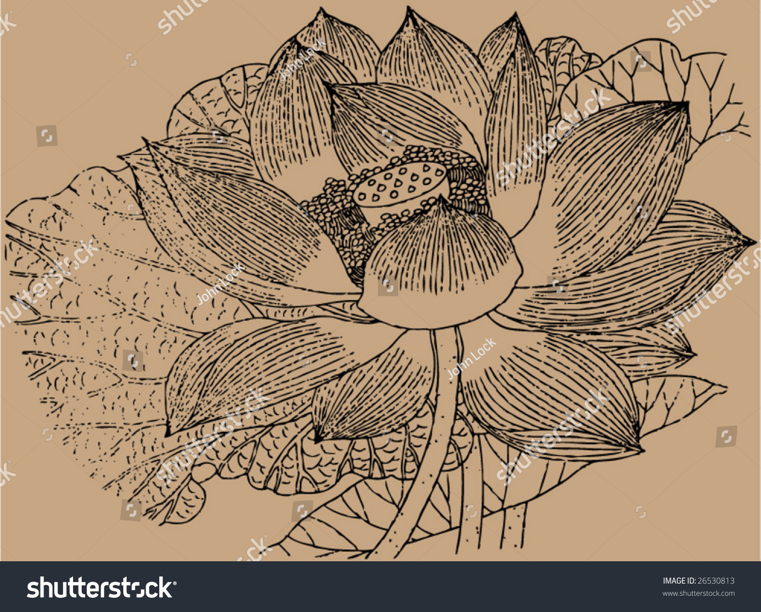 Traditional Flower Line Drawing : Vector traditional chinese stroke painting ming stock