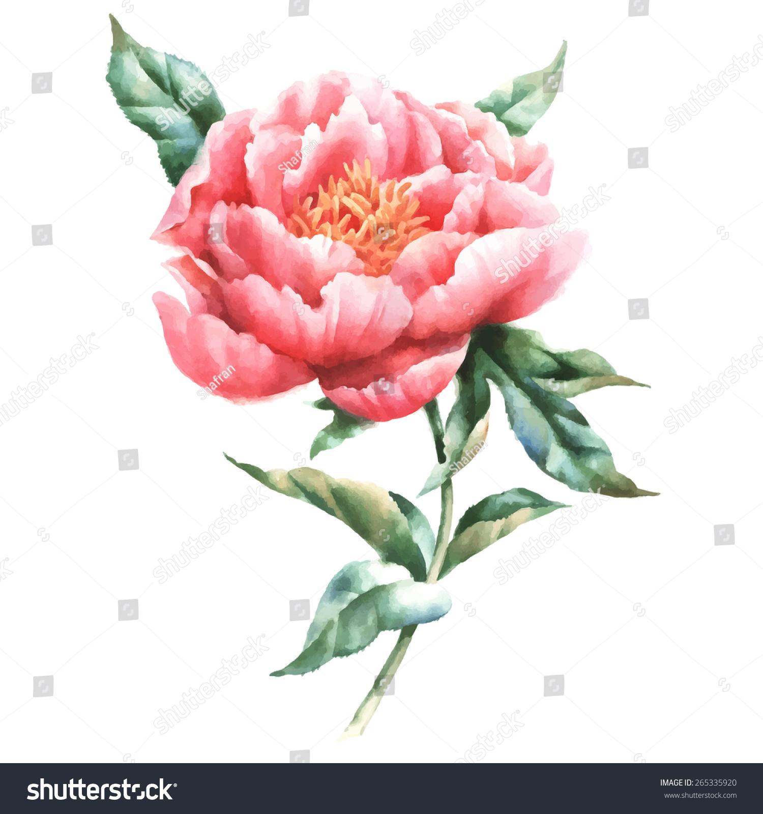 Картинки с цветами пионы нарисованные