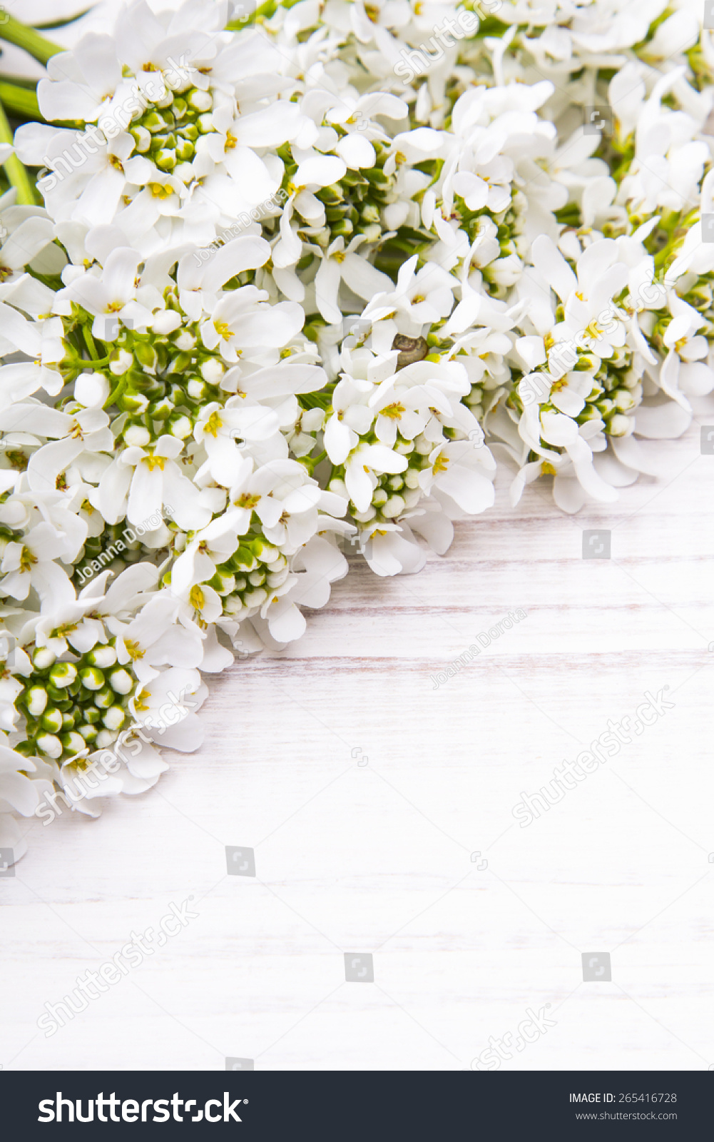 White Flowers Frame On White Wooden Background Ez Canvas