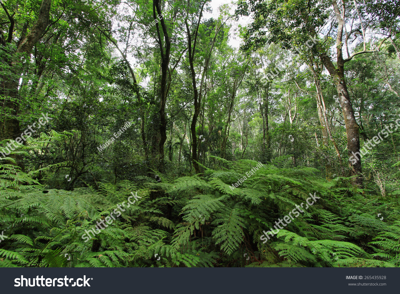 Garden Of Eden In South Africa Stock Photo 265435928 Shutterstock