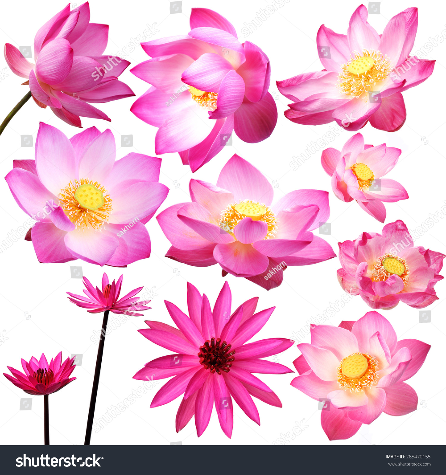 Lotus Flower Isolated On White Background Stock Photo Royalty Free