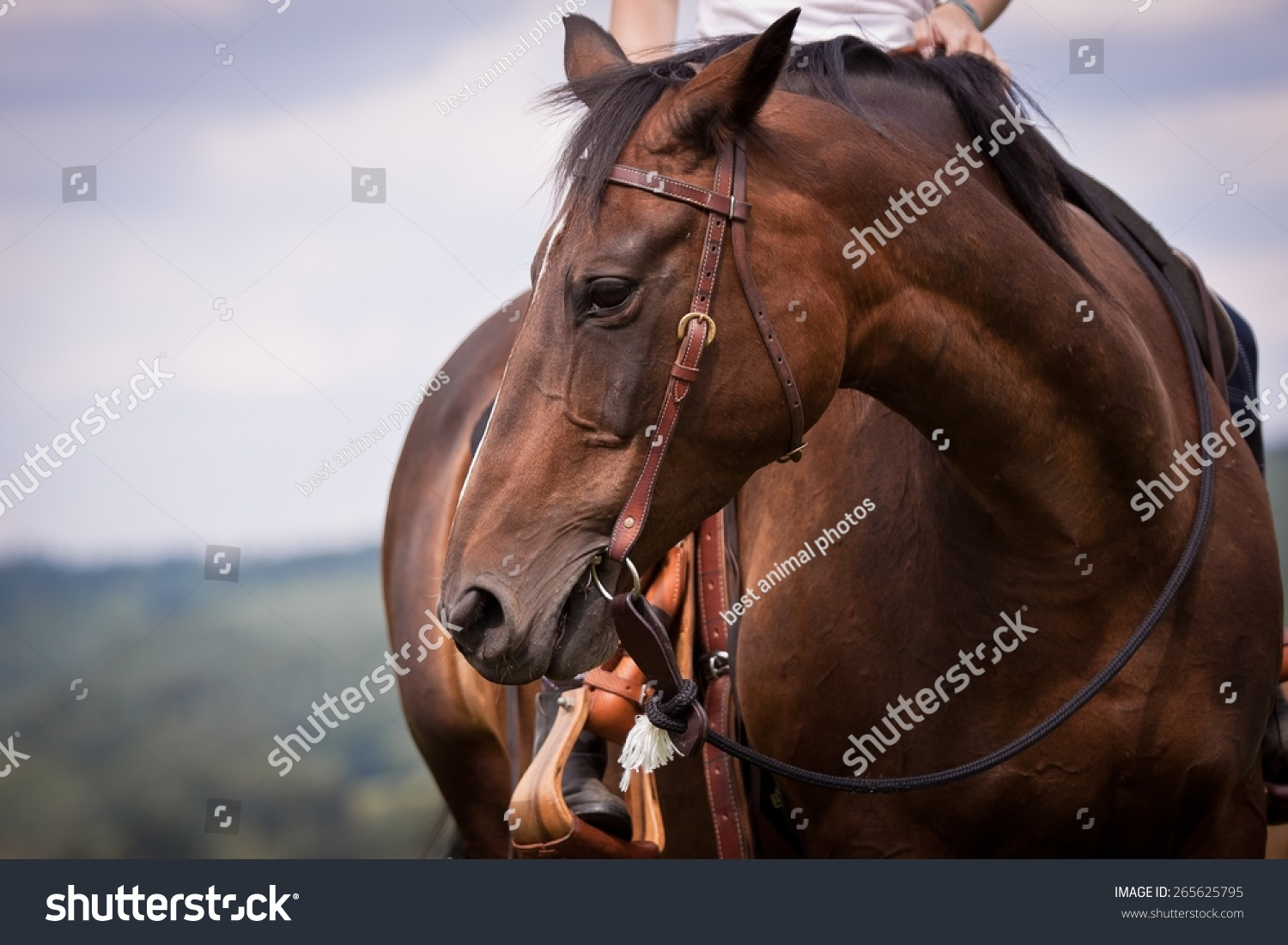 Western Ride Style Horse Rider Blue Stock Photo Edit Now 265625795