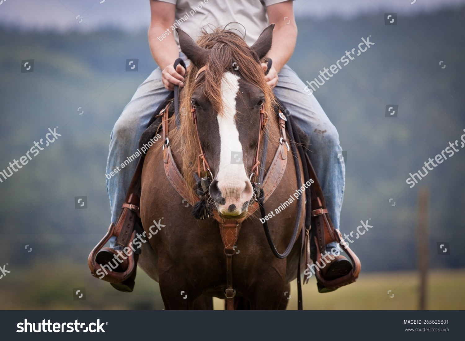 Western Ride Style Horse Rider Jeans Stock Photo Edit Now 265625801