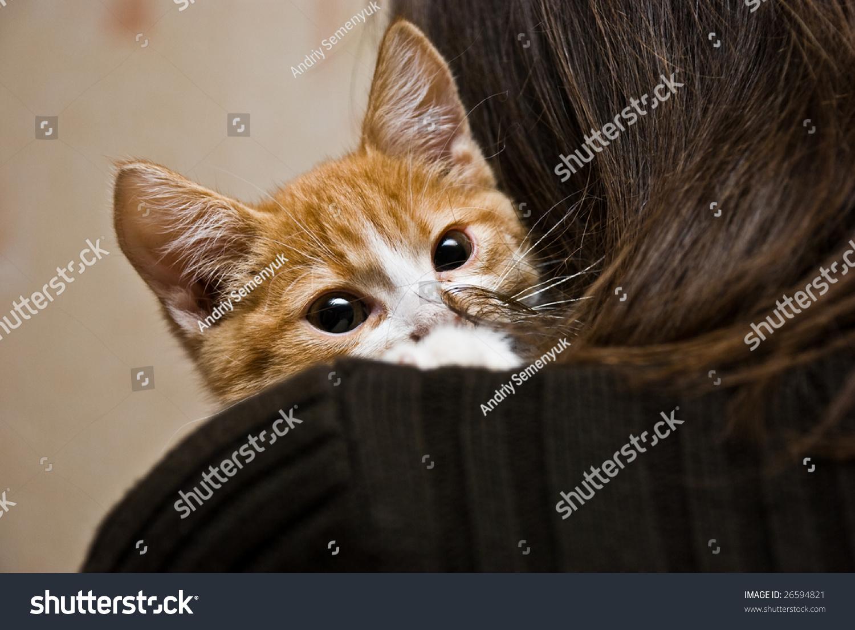 Adorable Kitten Stock Shutterstock