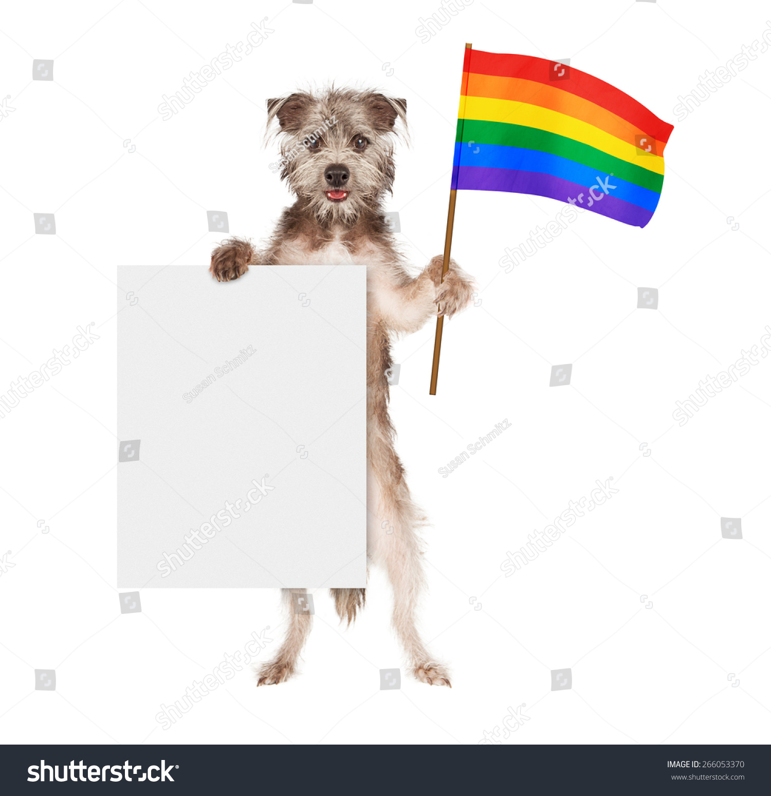 a happy and smiling dog standing up and holding a blank white sign and a rainbow