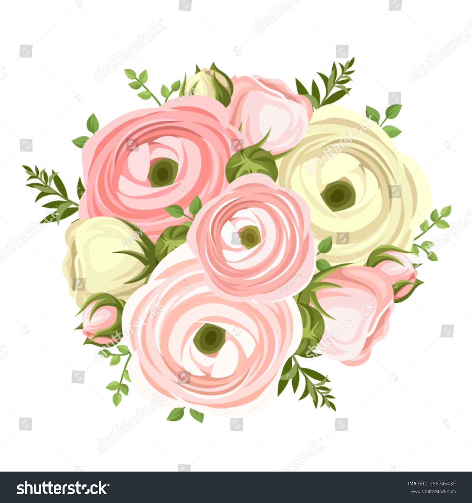 Vector Bouquet Of Pink And White Ranunculus Flowers On A White