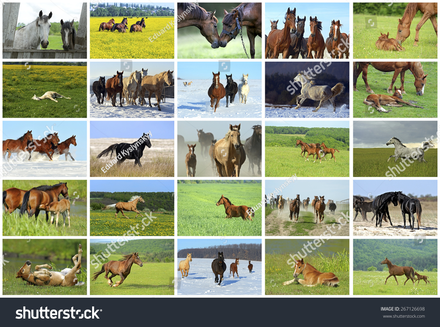 Collage Beautiful Horses Wild Stock Photo Edit Now 267126698