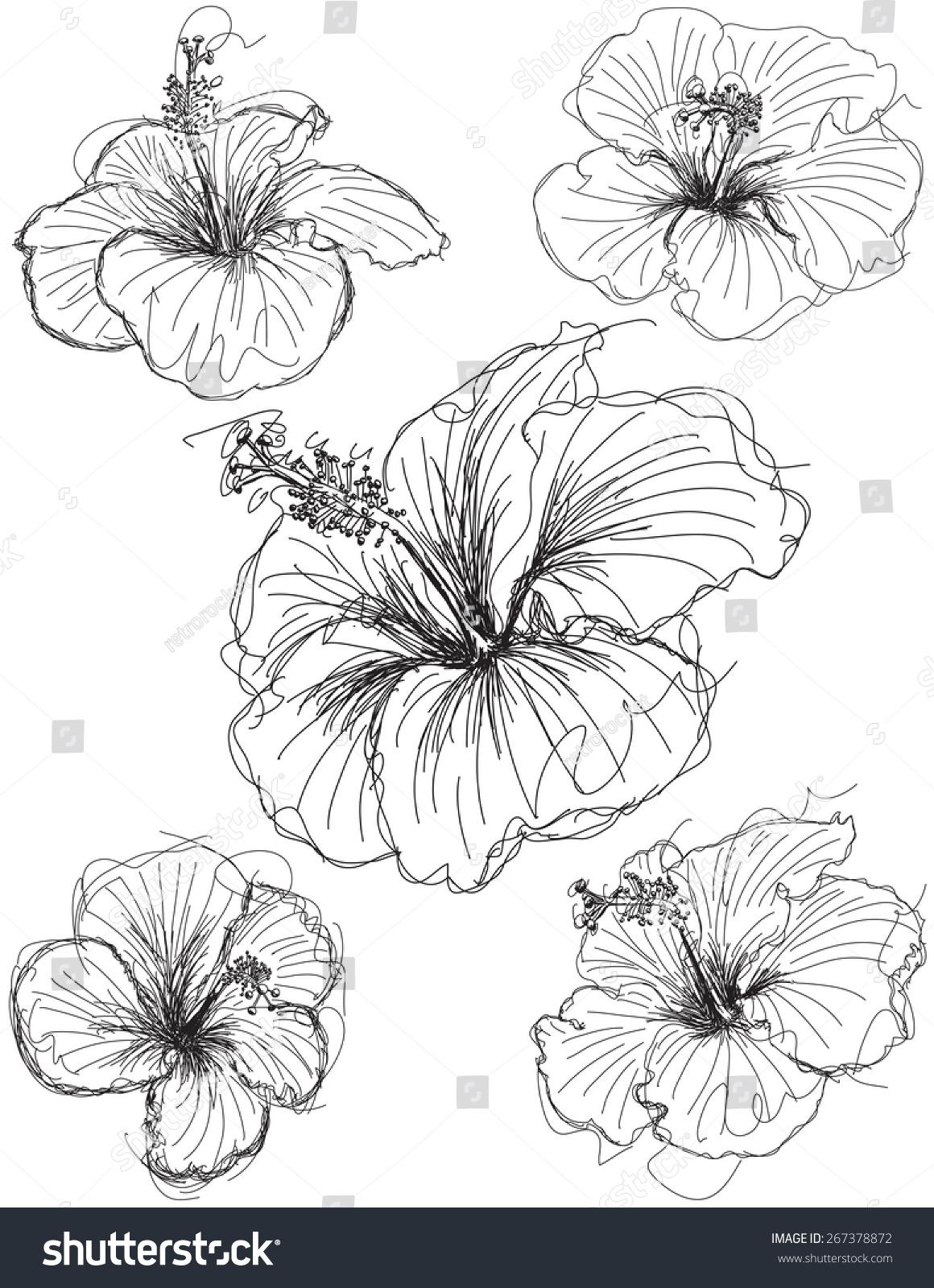 Hibiscus flower sketches hand drawn hibiscus stock vector royalty hibiscus flower sketches hand drawn hibiscus flower sketches izmirmasajfo