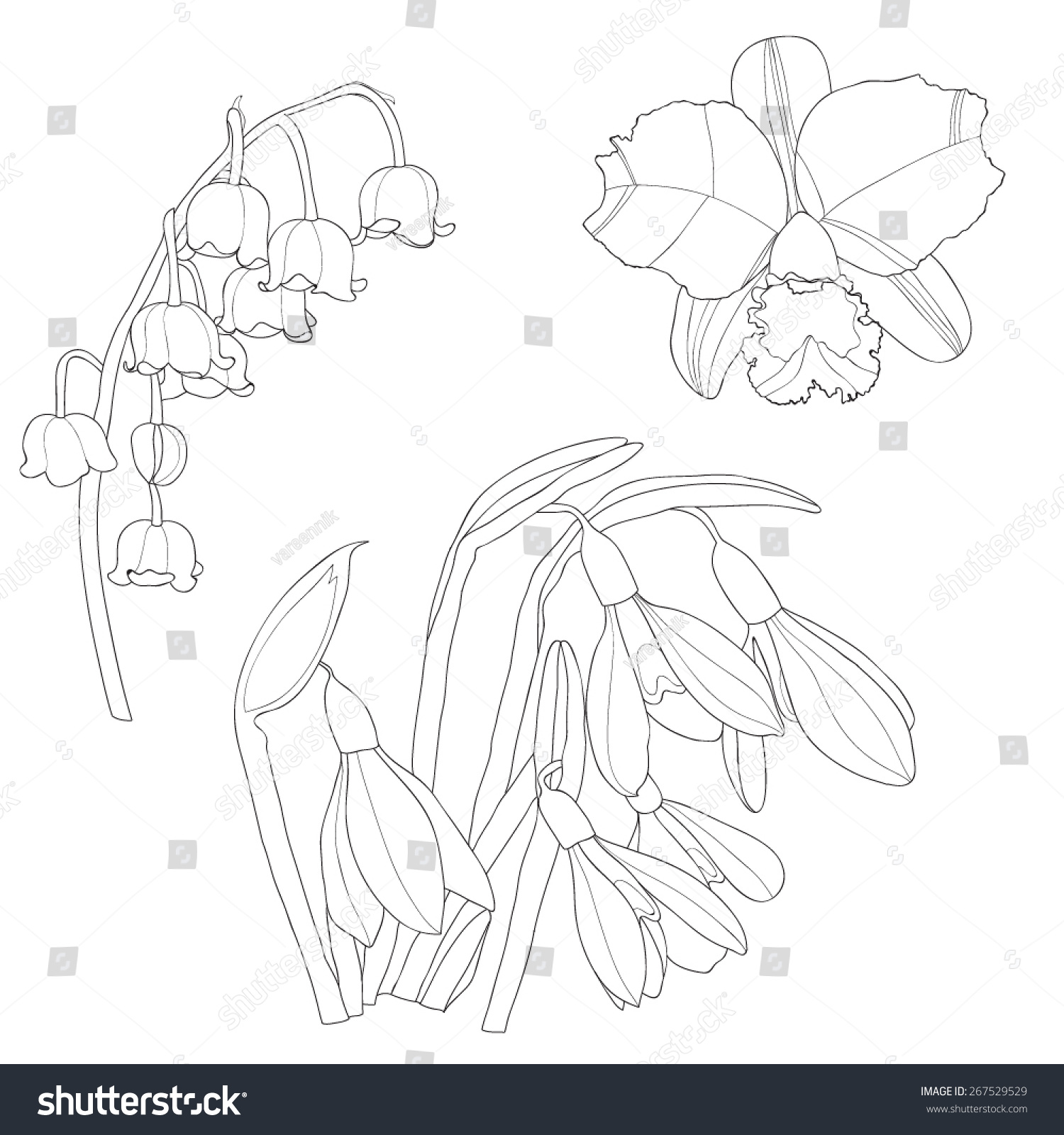 Vector Set Black White Isolated Flowers Stock Vector Royalty Free