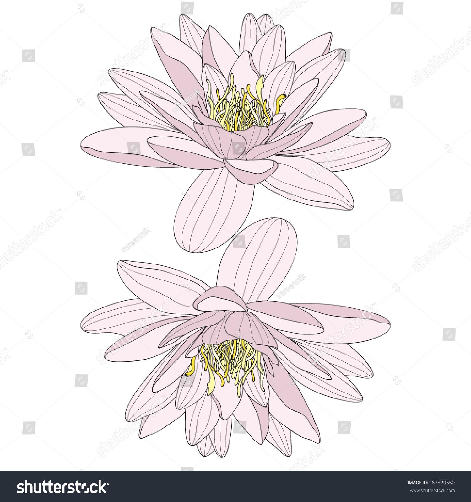 Vector Illustration Two Lotus Flower Symbol Stock Vector Royalty