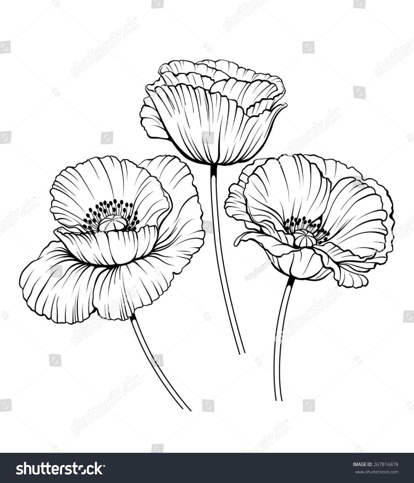 Anemone Flower Line Drawing : Black white illustration poppy flowers stock vector