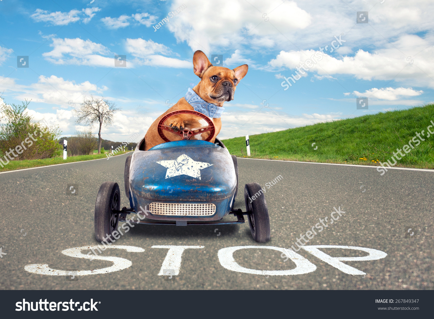 Dog French Bulldog Driving Toy Car Stock Photo 267849347 ...