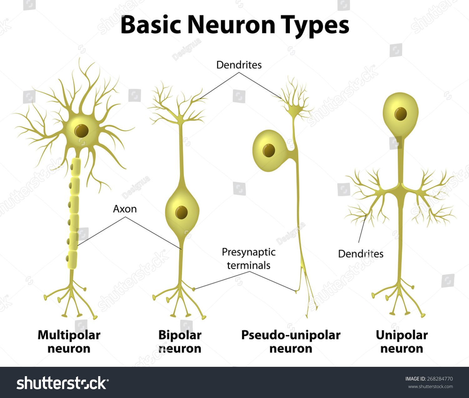 neurons the basic elements of behavior Neurons the basic elements of behavior essayelements 1 neurons: the basic elements of behavior introduction to psychology 101 elements 2 the basic elements of behavior the human body is a tremendous creation that is quite capable of performing a multitude of multifaceted movements and thoughts.