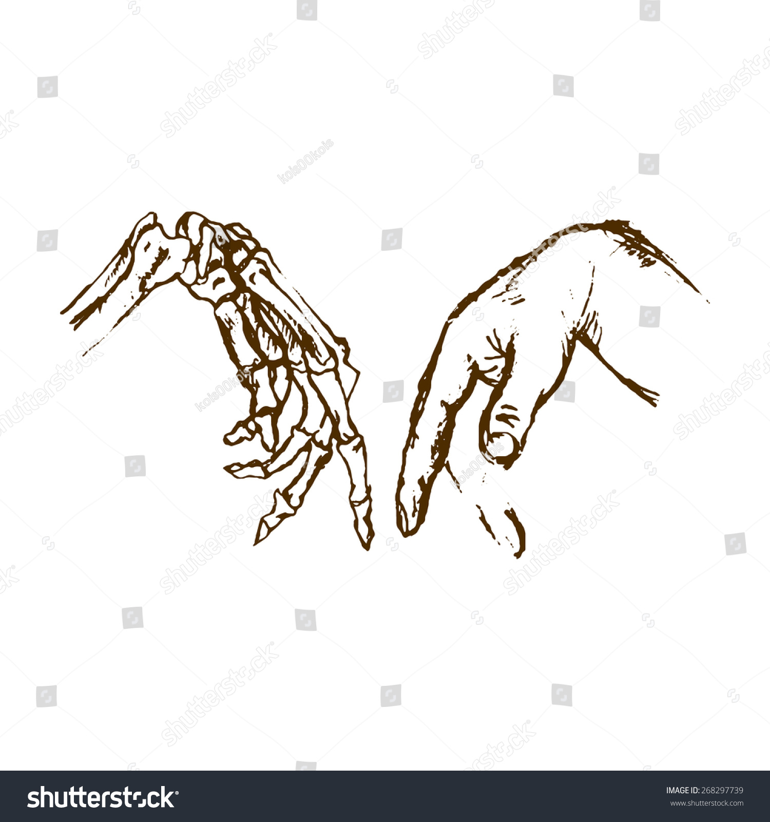 Human Anatomy Hand Skeleton Hand Bones Stock Vector Royalty Free