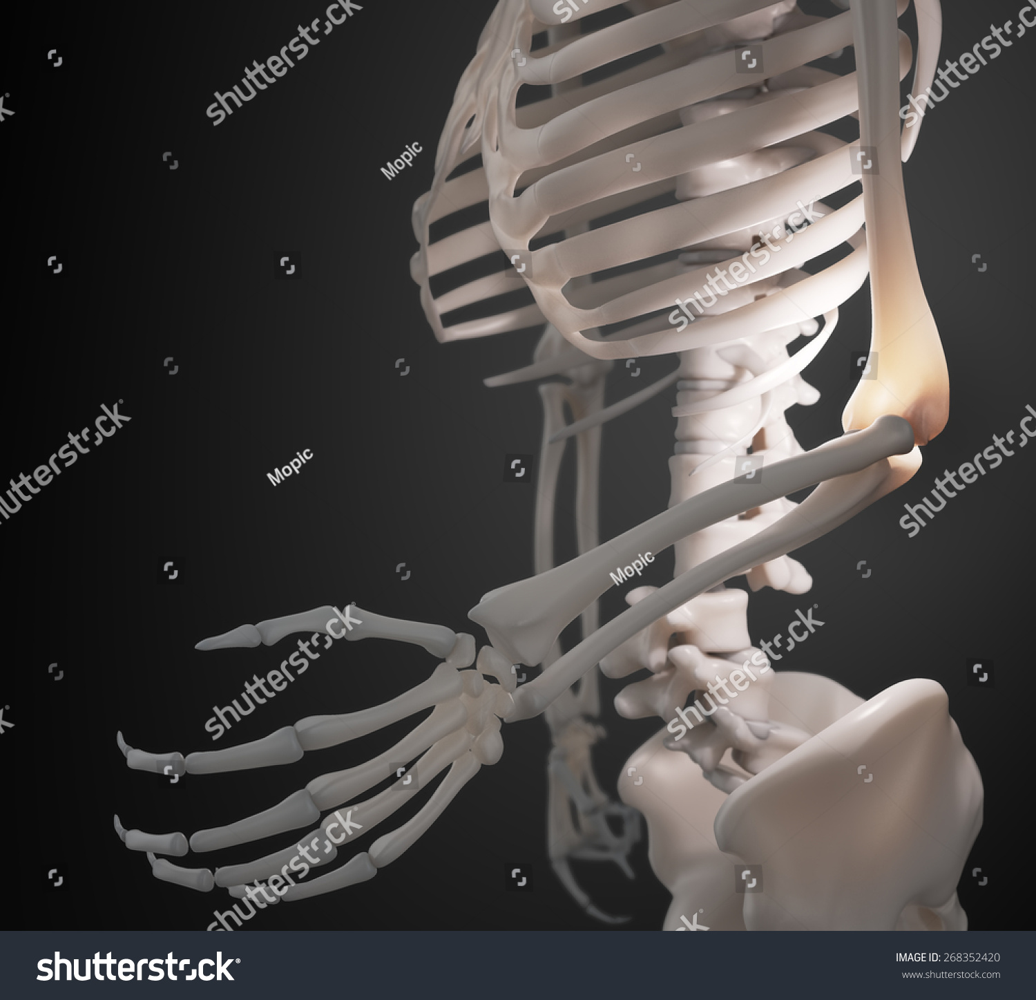 Royalty Free Stock Illustration of Human Skeleton Arm Elbow Anatomy ...