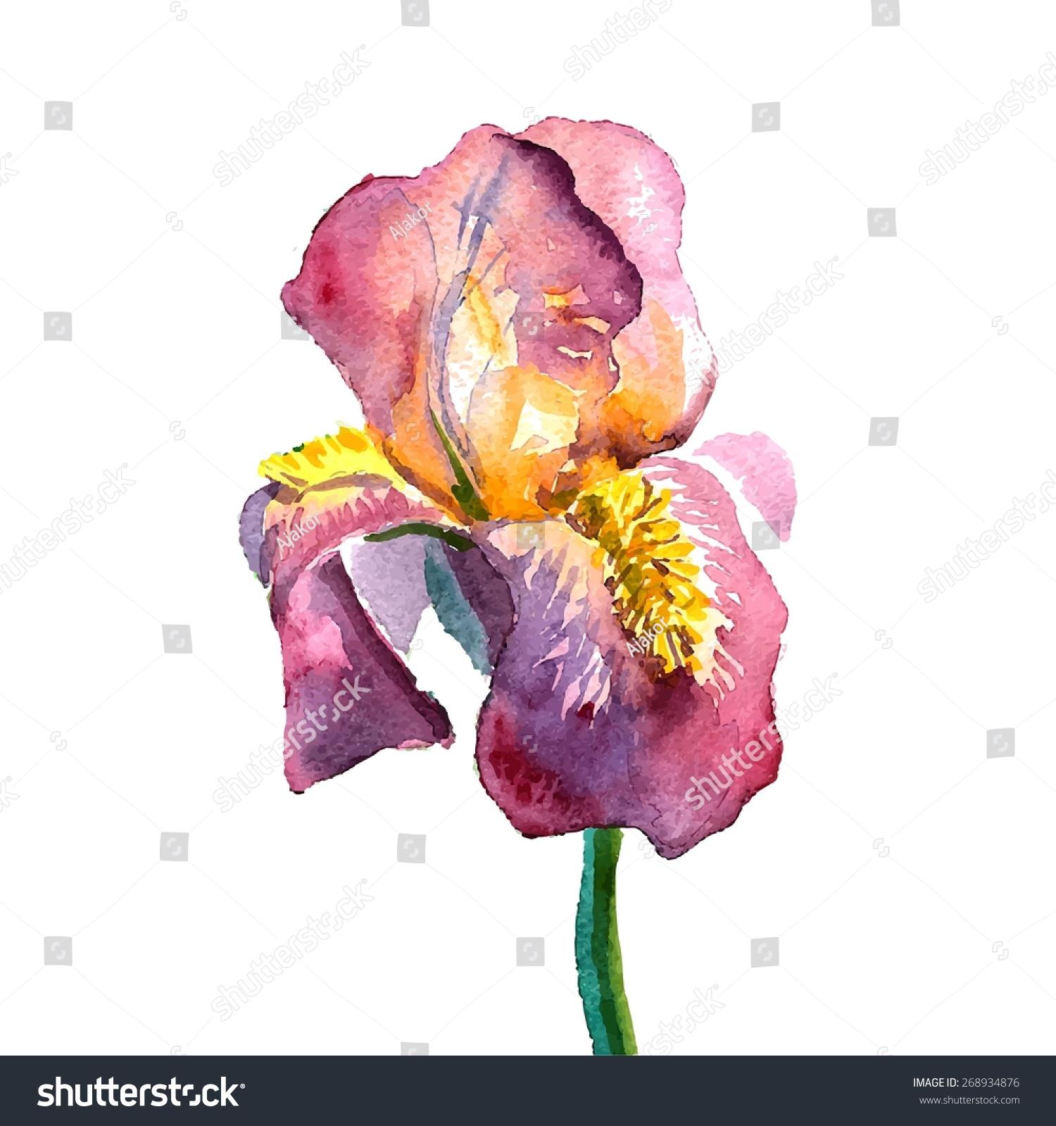Watercolor tattoo idea iris flower vector stock vector 268934876 watercolor tattoo idea iris flower vector illustration izmirmasajfo