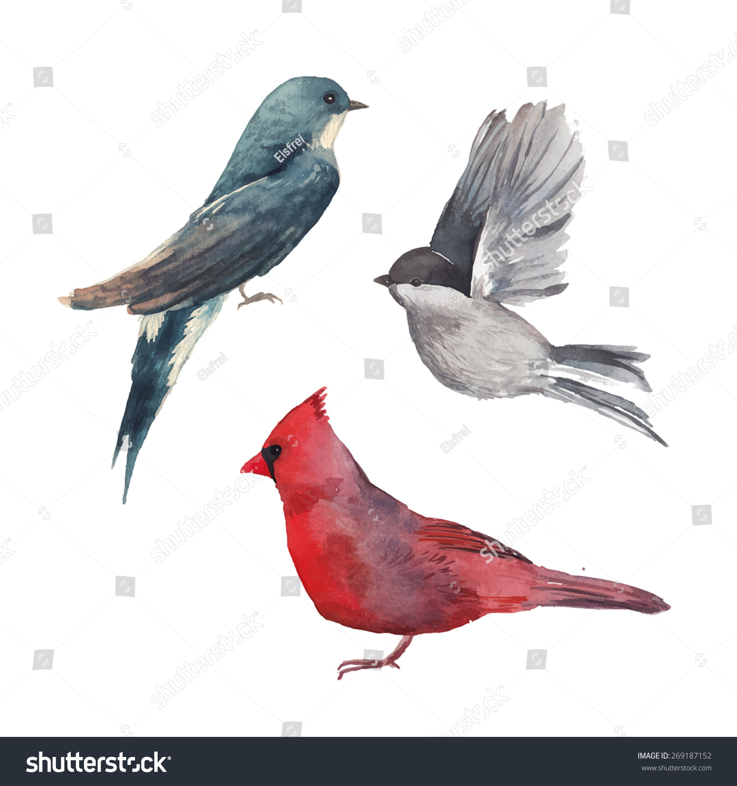 watercolor bird set red cardinal bird stock vector 269187152