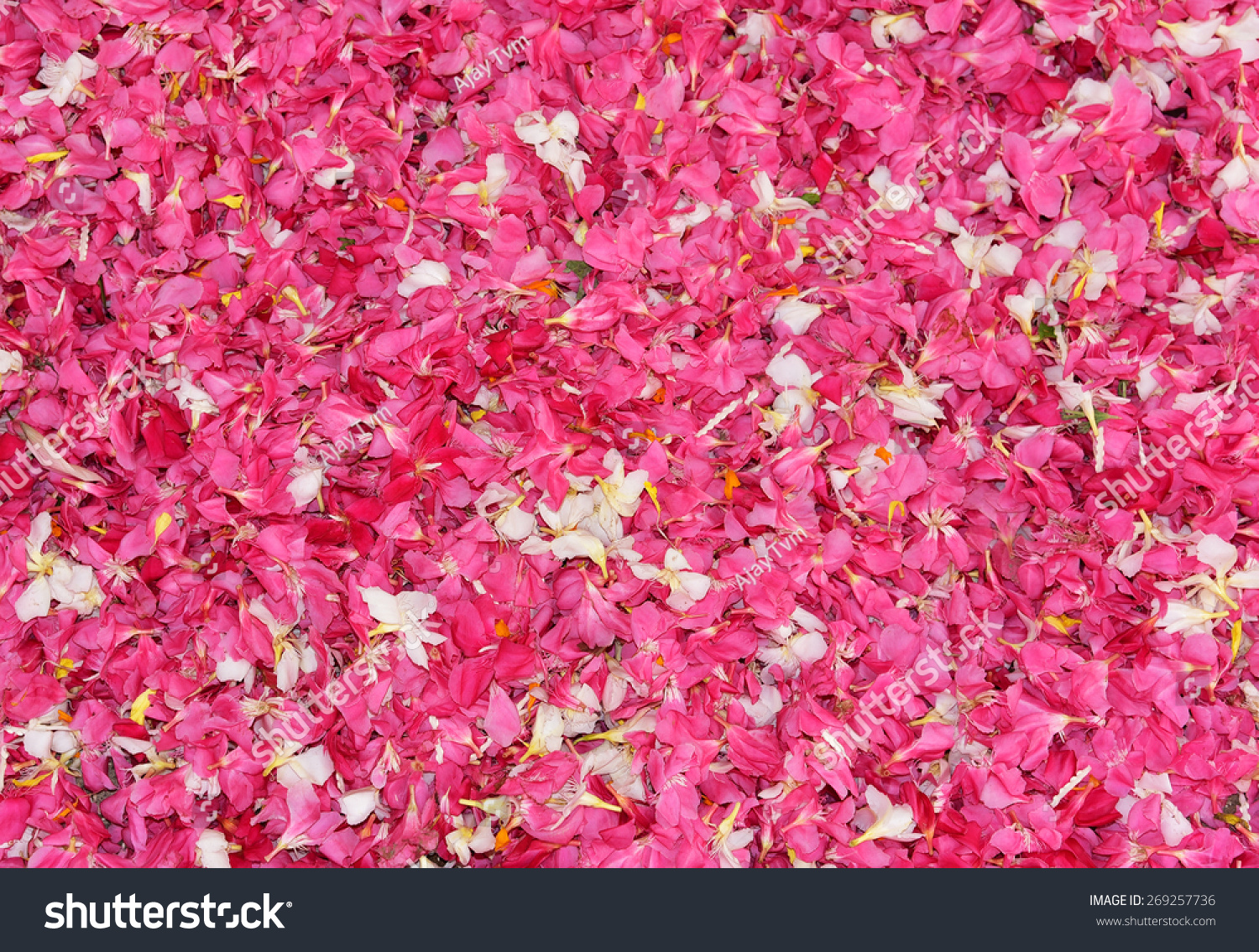 Uniform Floral Background Pink White Oleander Stock Photo Edit Now