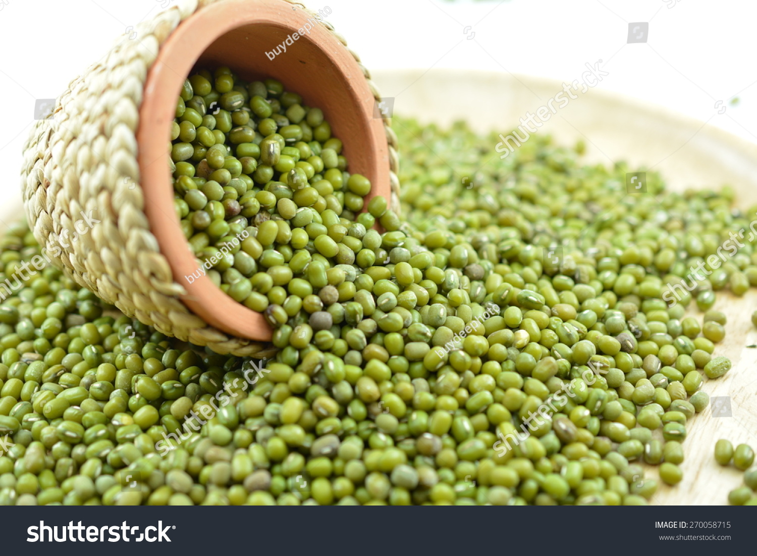 Bean plants. Plants of the legume family. Fruits of legumes 30