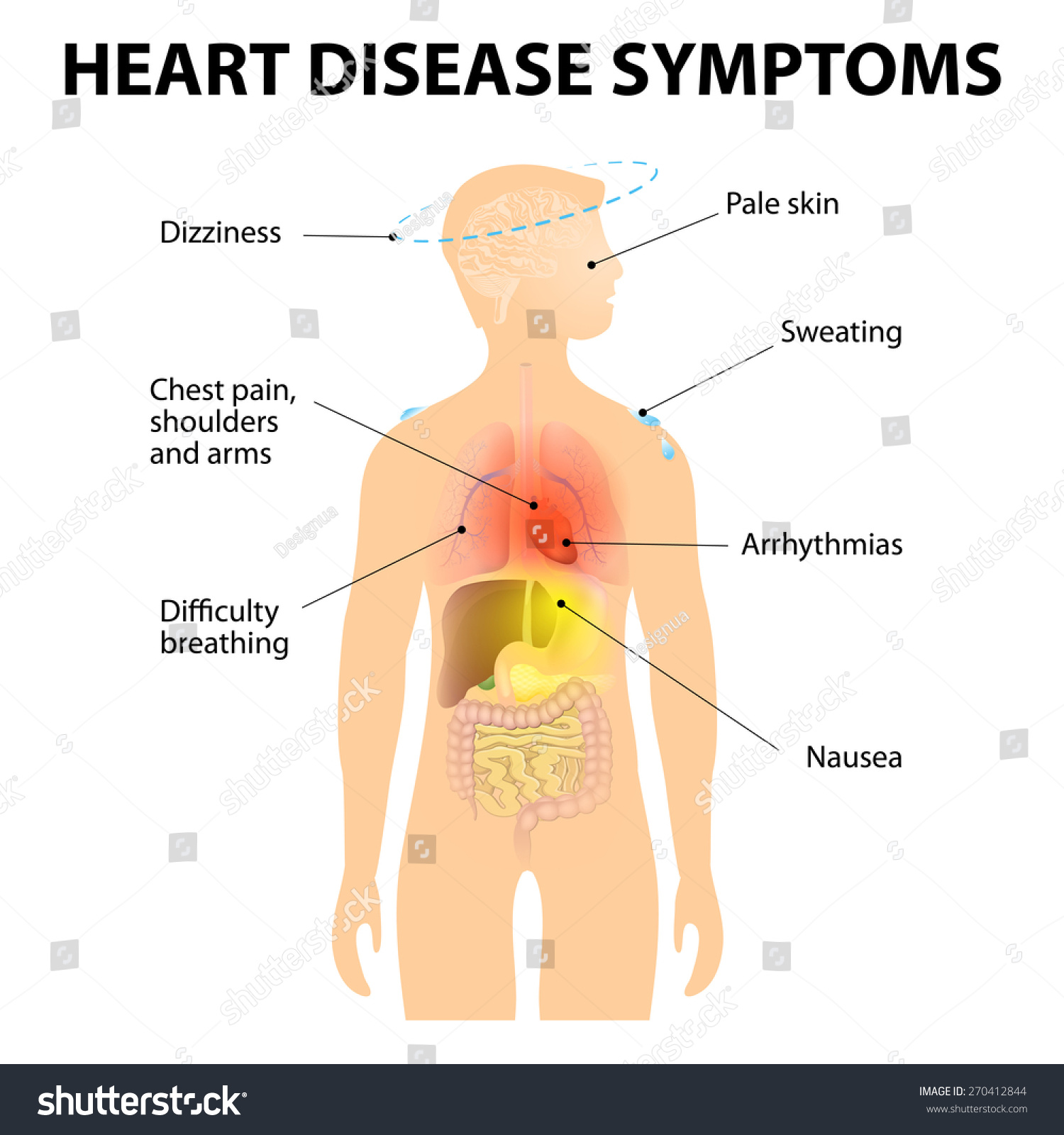 What are some symptoms of heart damage?