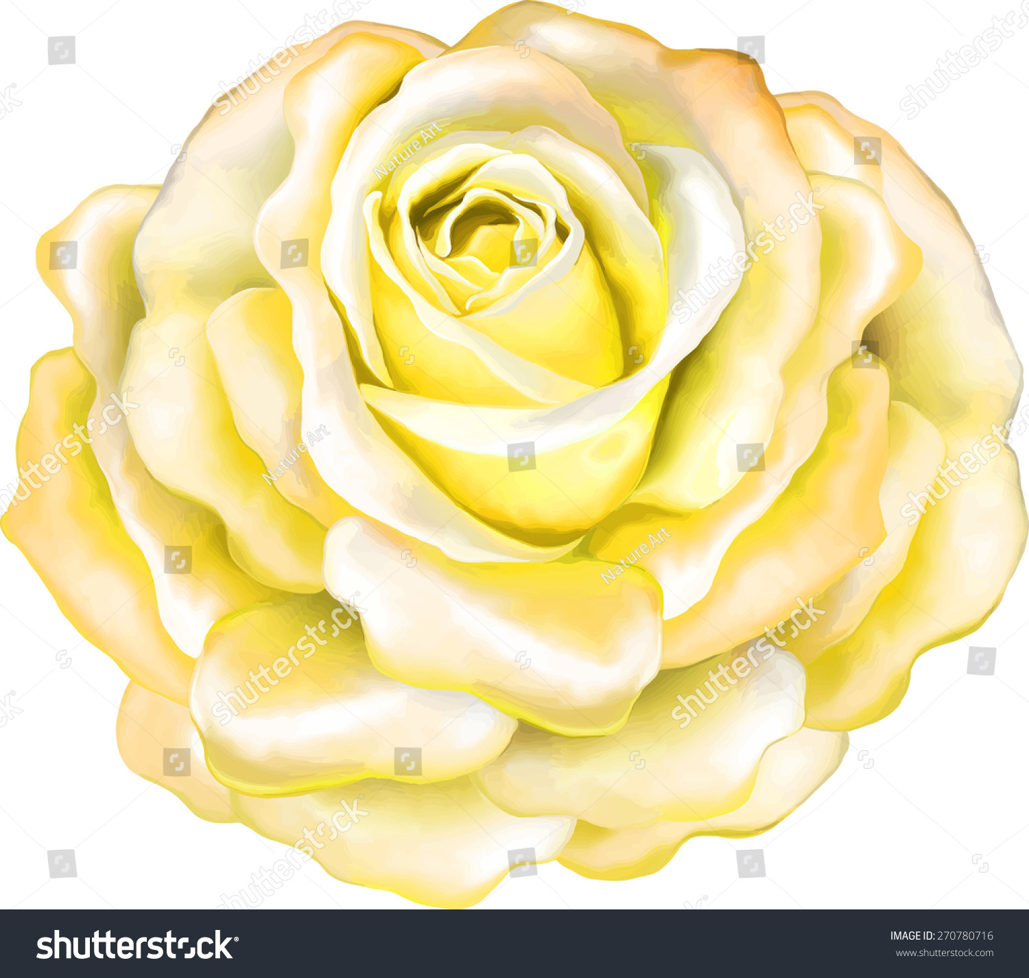 Beautiful Light Yellow Rose Spring Flower Stock Vector 270780716