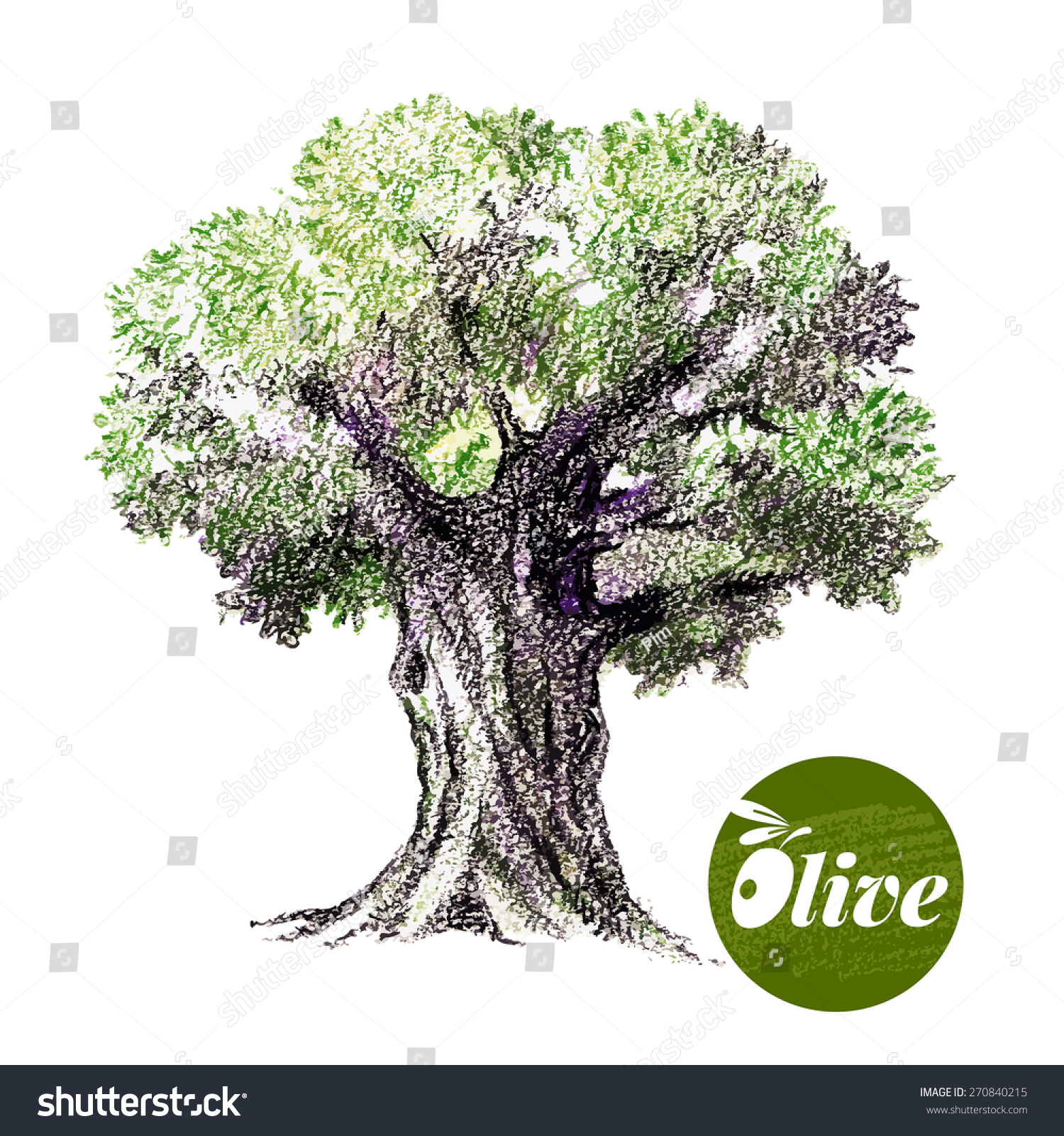 Olive Tree Vector Illustration Hand Drawn Stock Vector (Royalty Free ...