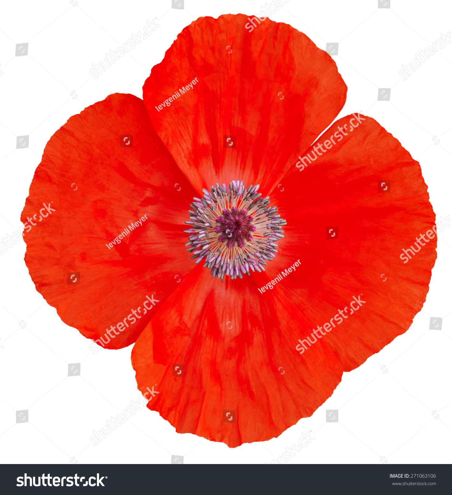Poppy Flower Remembrance Day Stock Photo 271063106 ...