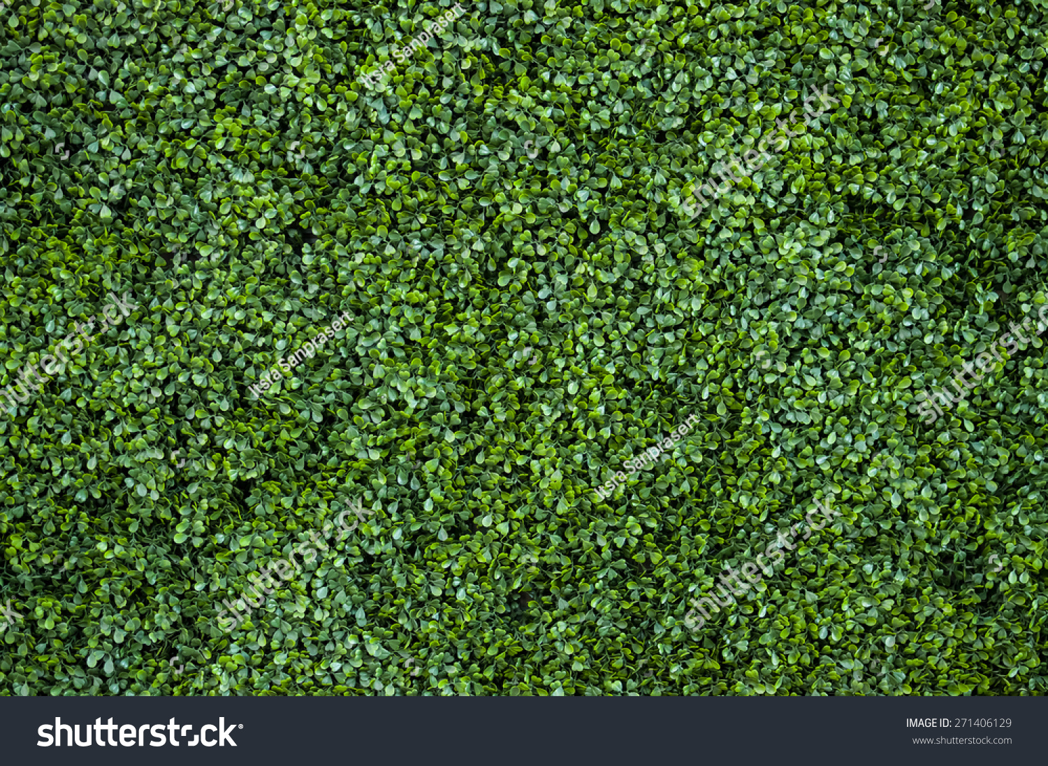 Natural Green Leaf Wall Texture Background Stock Photo