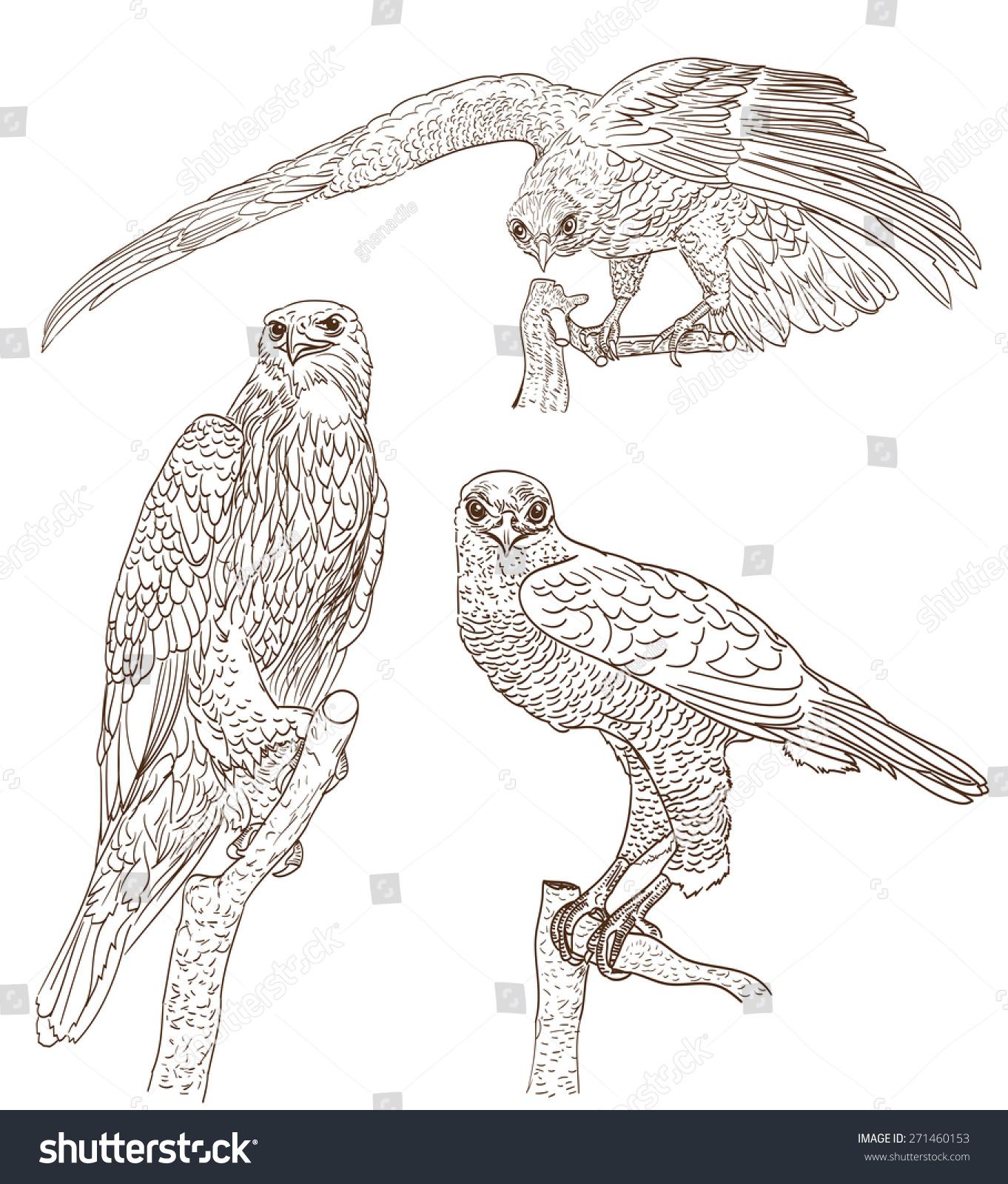 set drawings birds prey stock illustration 271460153 shutterstock