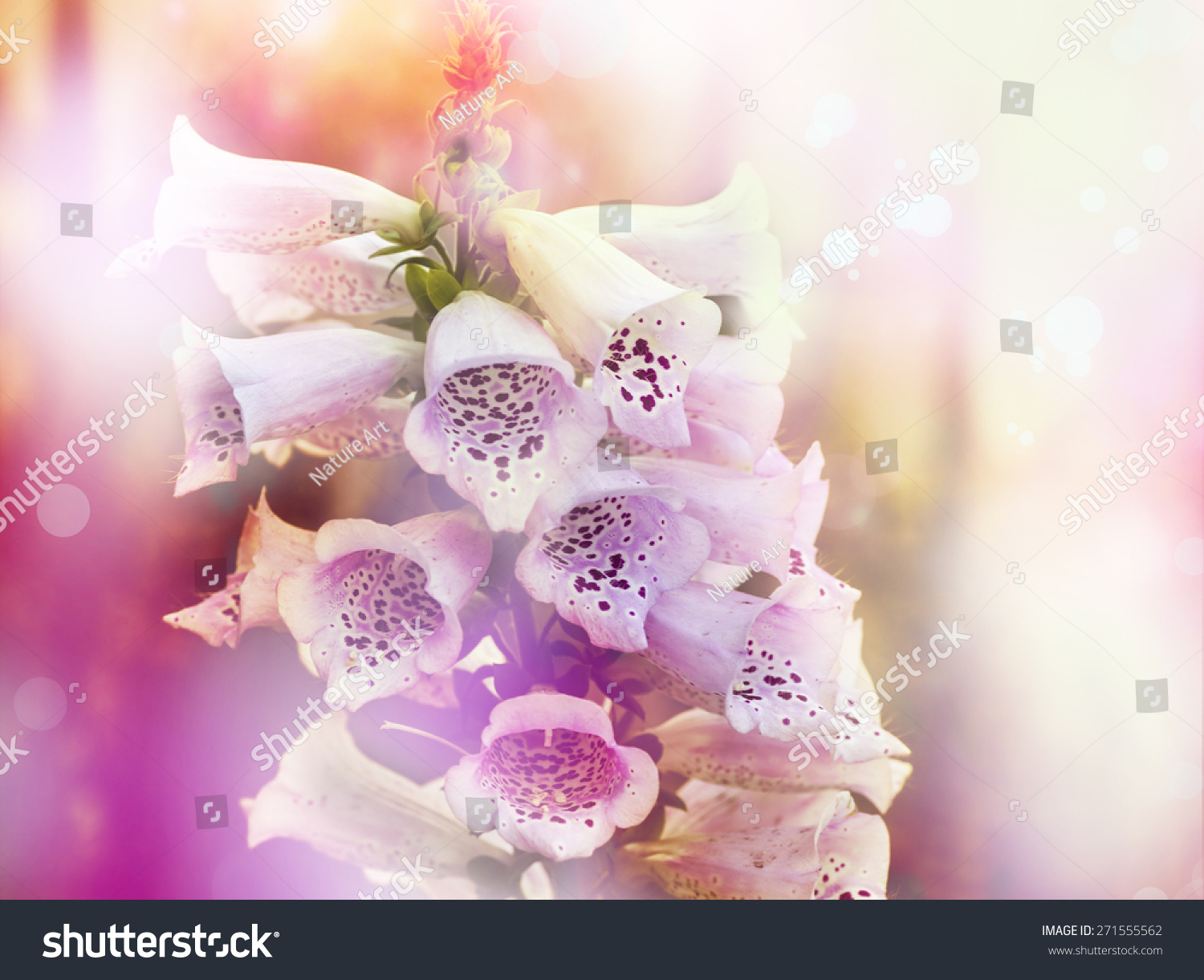 White Pink Bell Flowers Spring Convallaria Stock Photo Royalty Free
