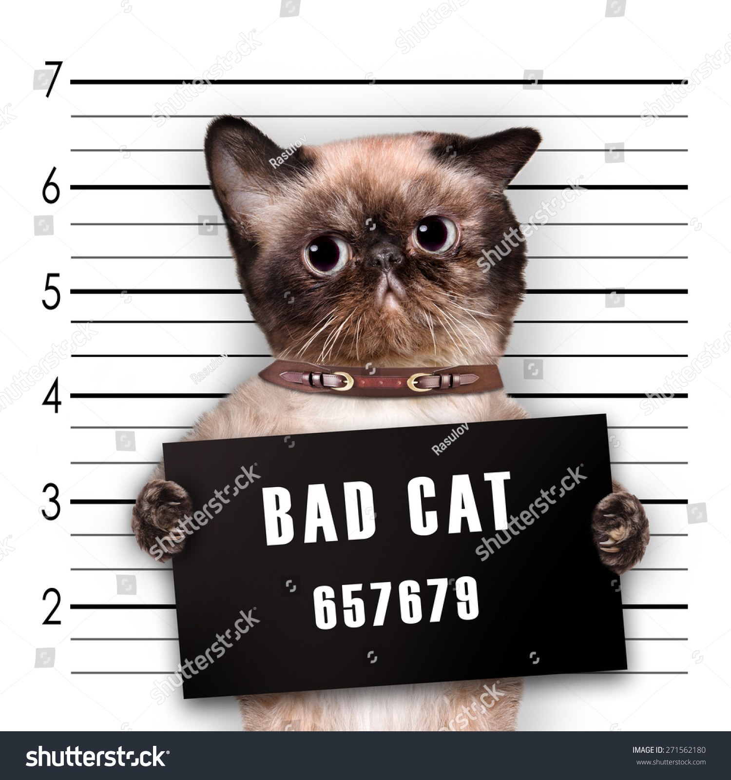 Stock Photo Bad Cat