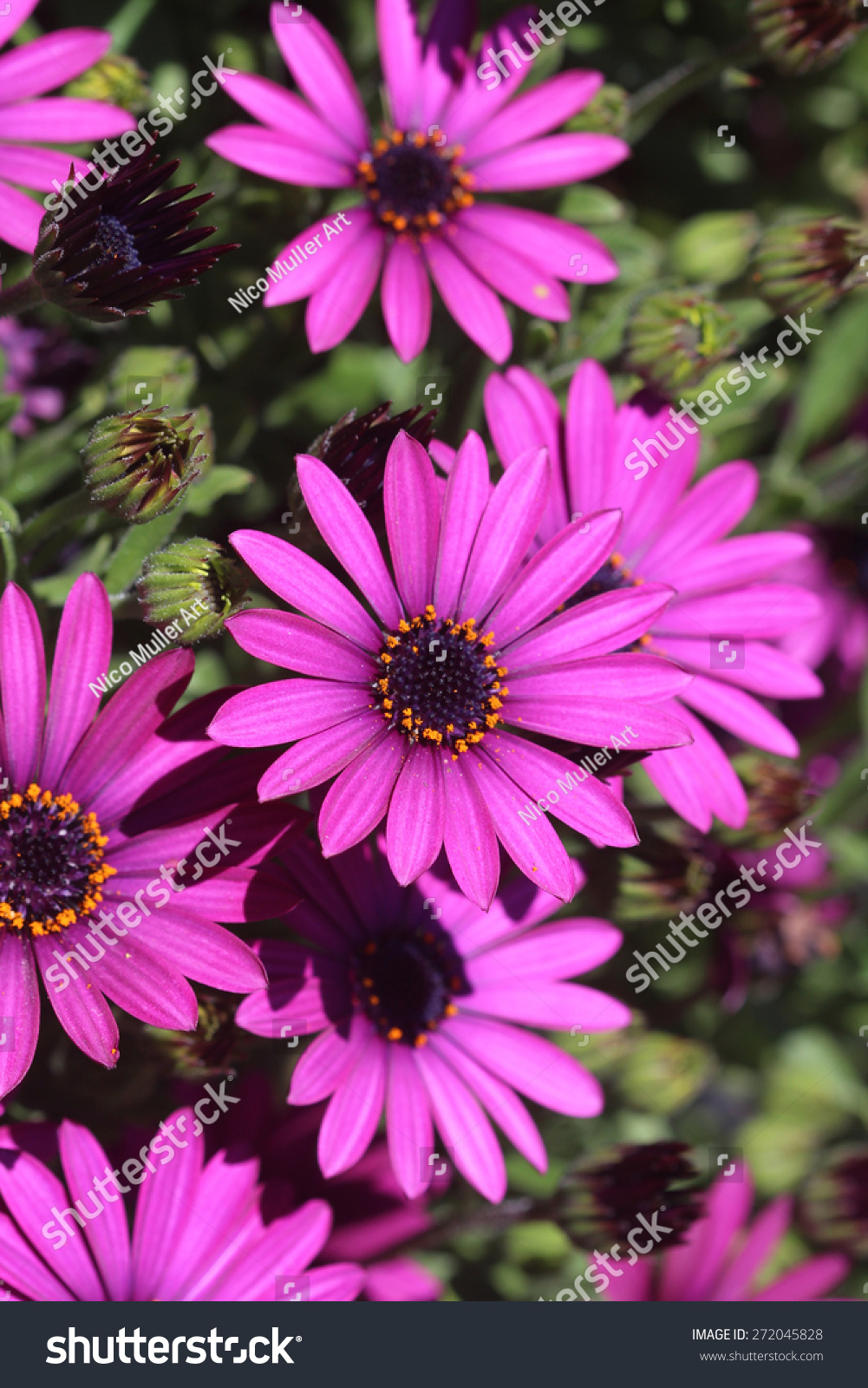 Daisies Other Spring Flowers Bray Co Stock Photo Royalty Free