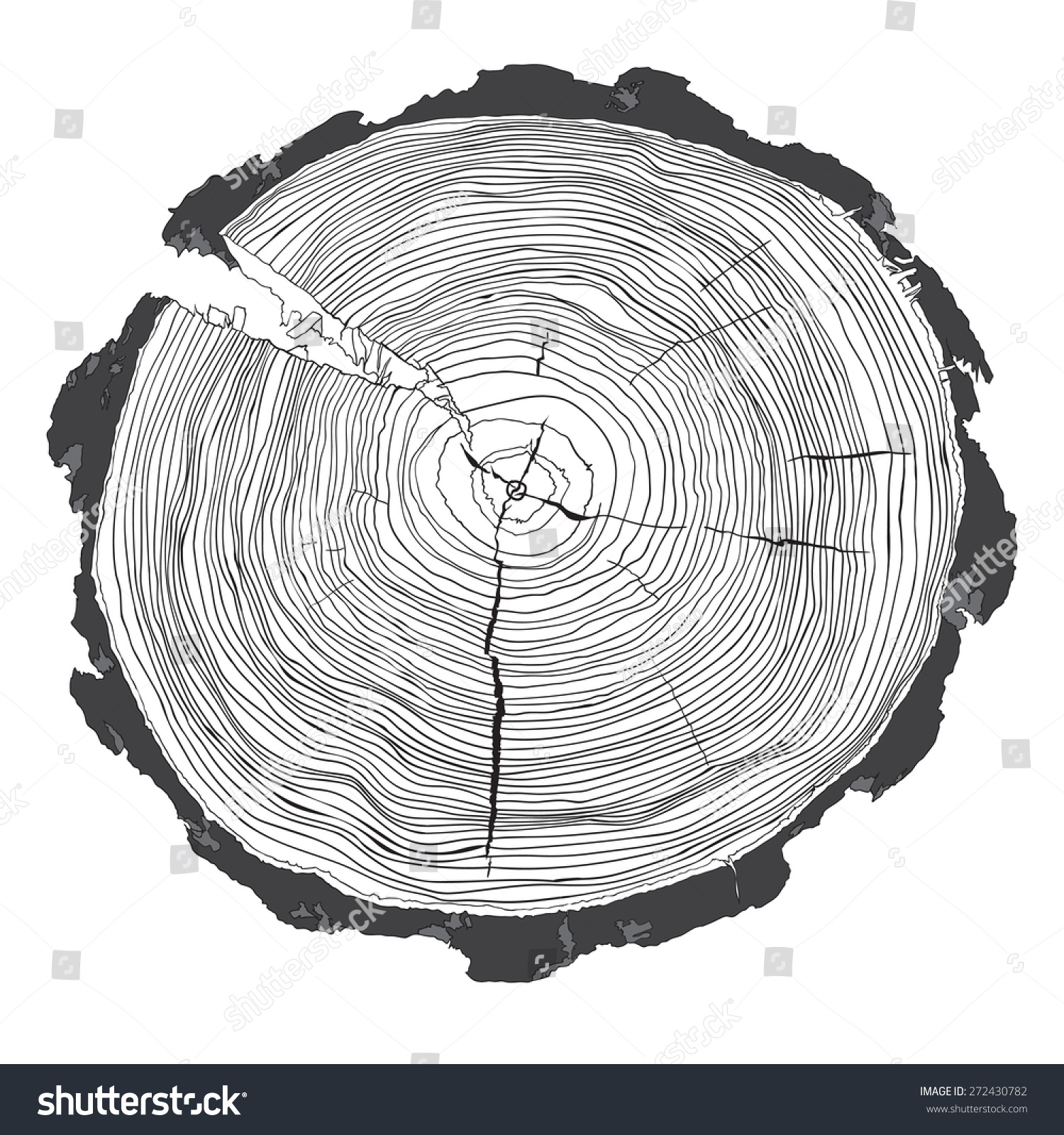 Annual Tree Growth Rings Grayscale Drawing Stock Vector