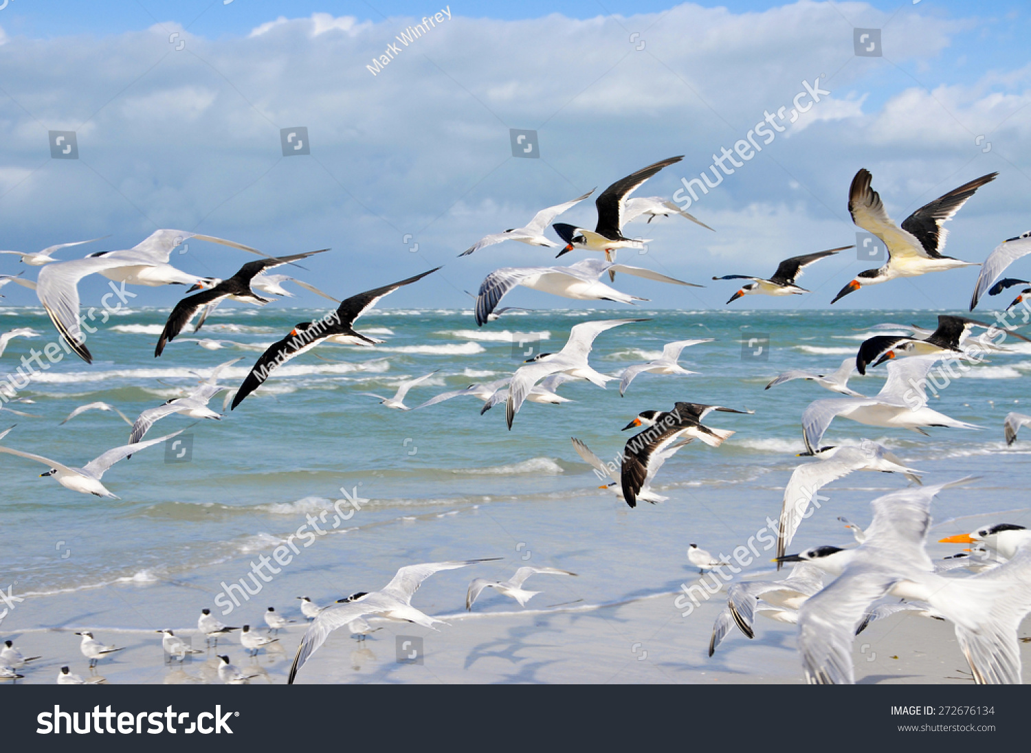 stock-photo-a-large-group-of-seagulls-ta