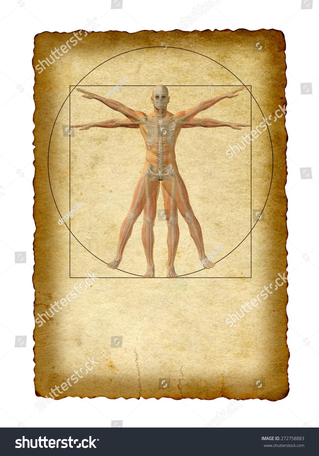 Concept Conceptual Vitruvian Human Body Drawing Stock Illustration