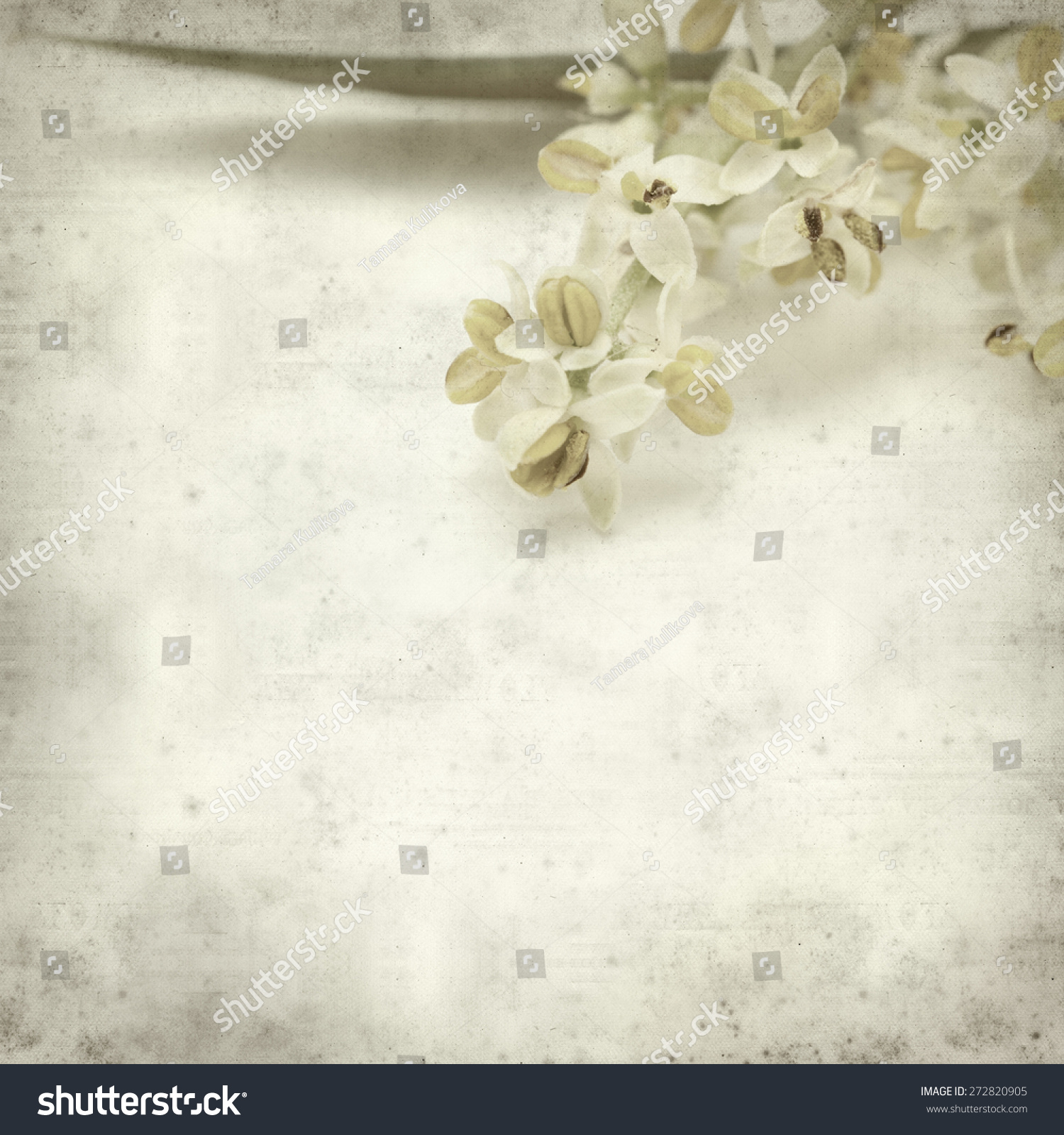Textured Old Paper Background With Olive Tree Flowers Ez Canvas