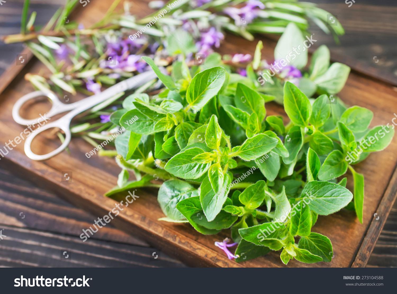 Aroma herbs stock photo 273104588 shutterstock - Aromatic herbs pots multiple benefits ...