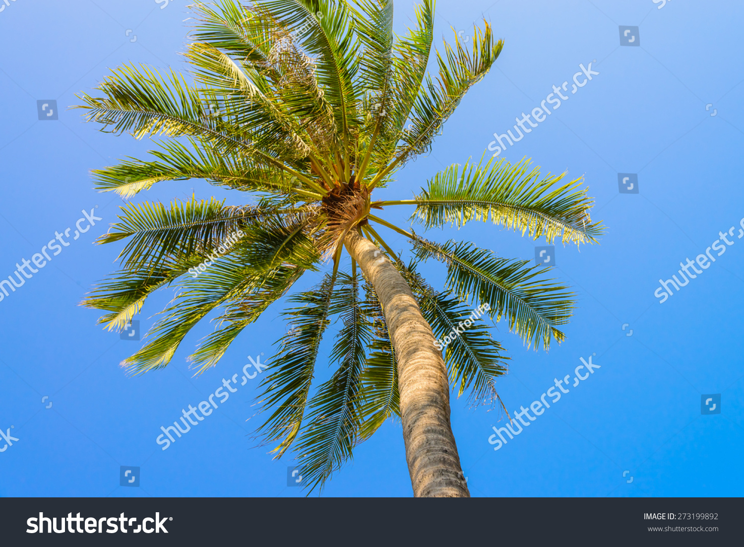 Palm Tree On Blue Sky Stock Photo 273199892 : Shutterstock