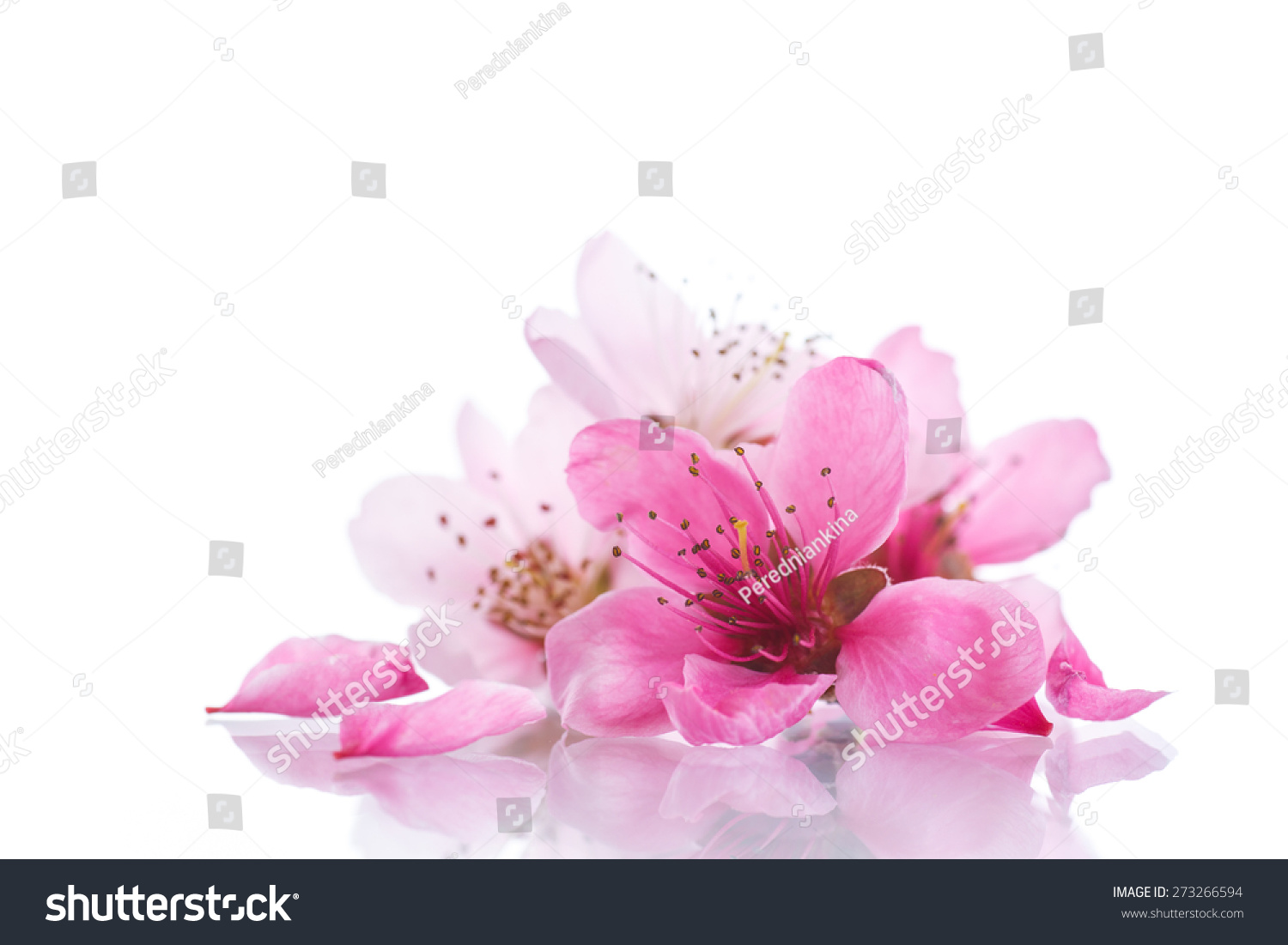 Peach Pink Flowers On A White Background Ez Canvas