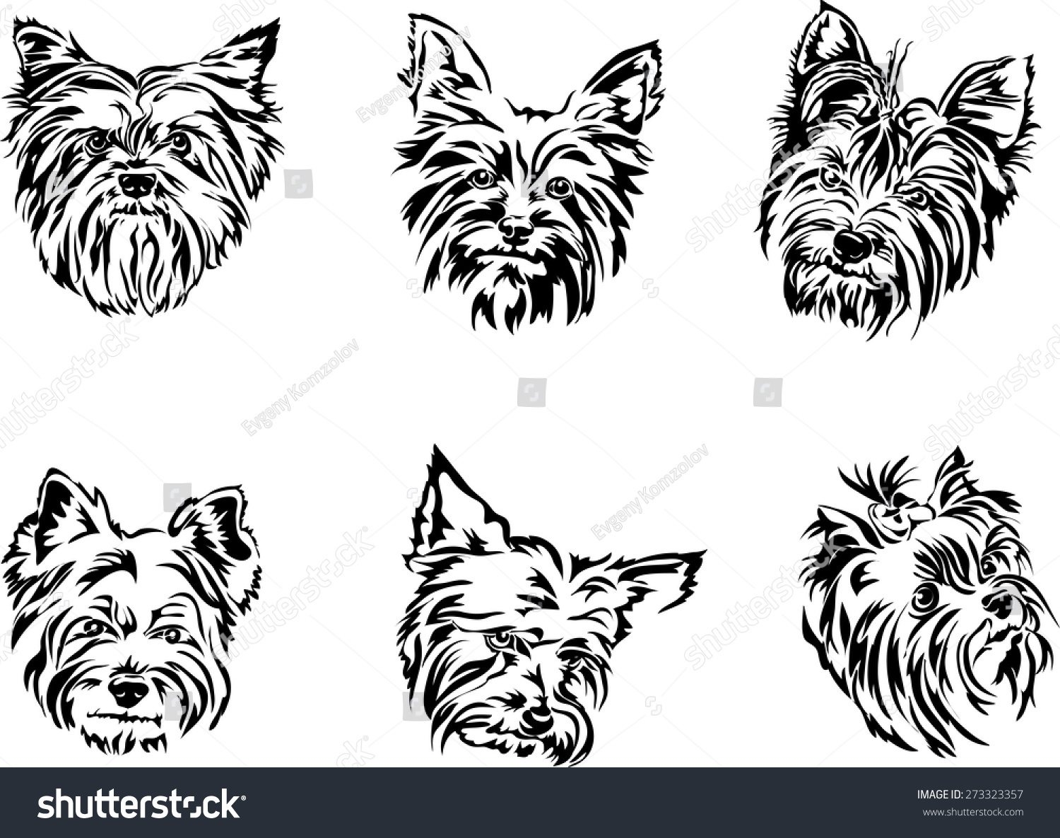 Line Drawing Yorkie : Yorkshire terrier portrait graphics stock vector