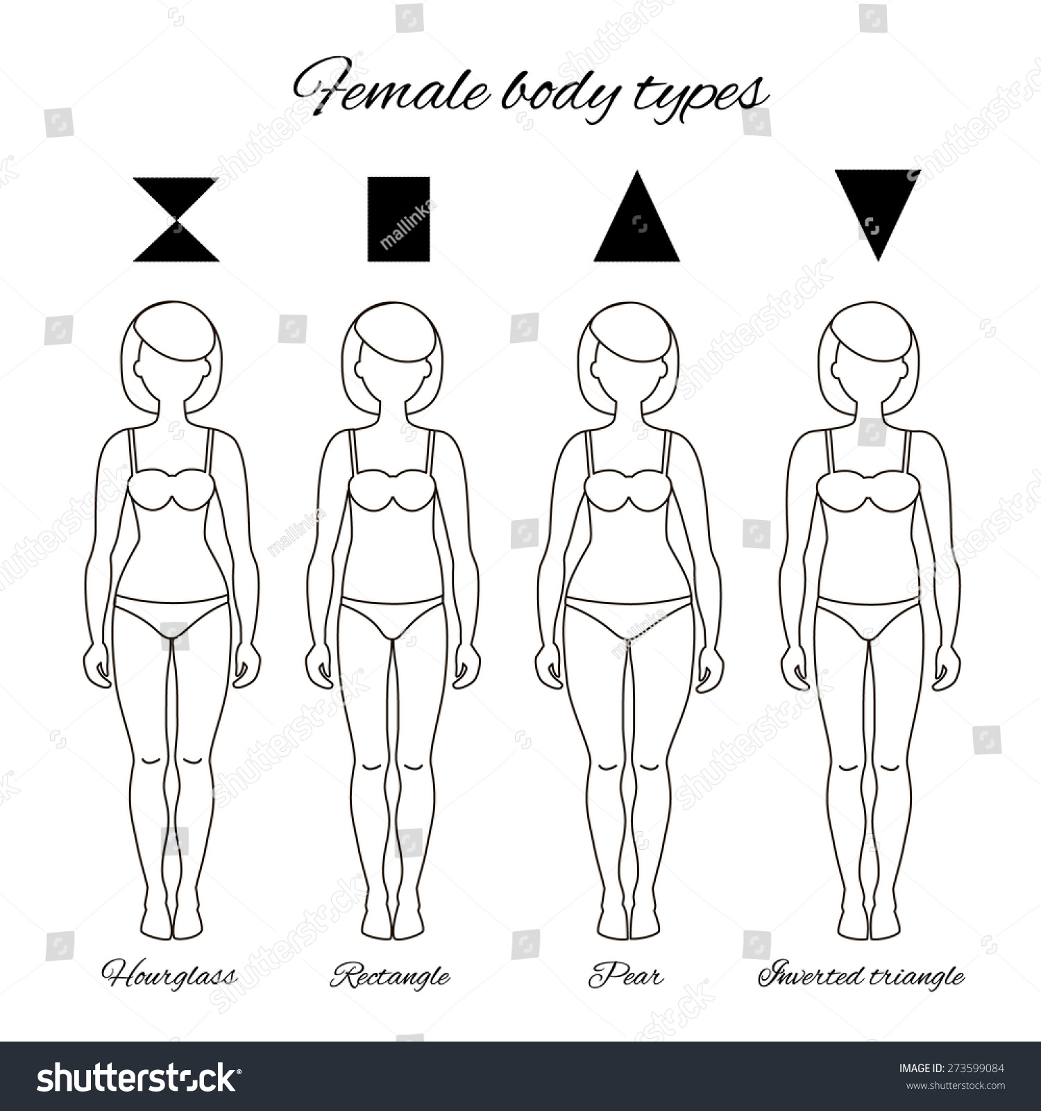 b94eae33b3 Vector illustration of different women s figures. Four female body types   hourglass