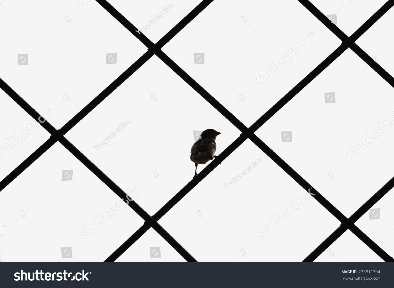 Bird Silhouette Cage Texture Creative Symbol Stock Photo Edit Now