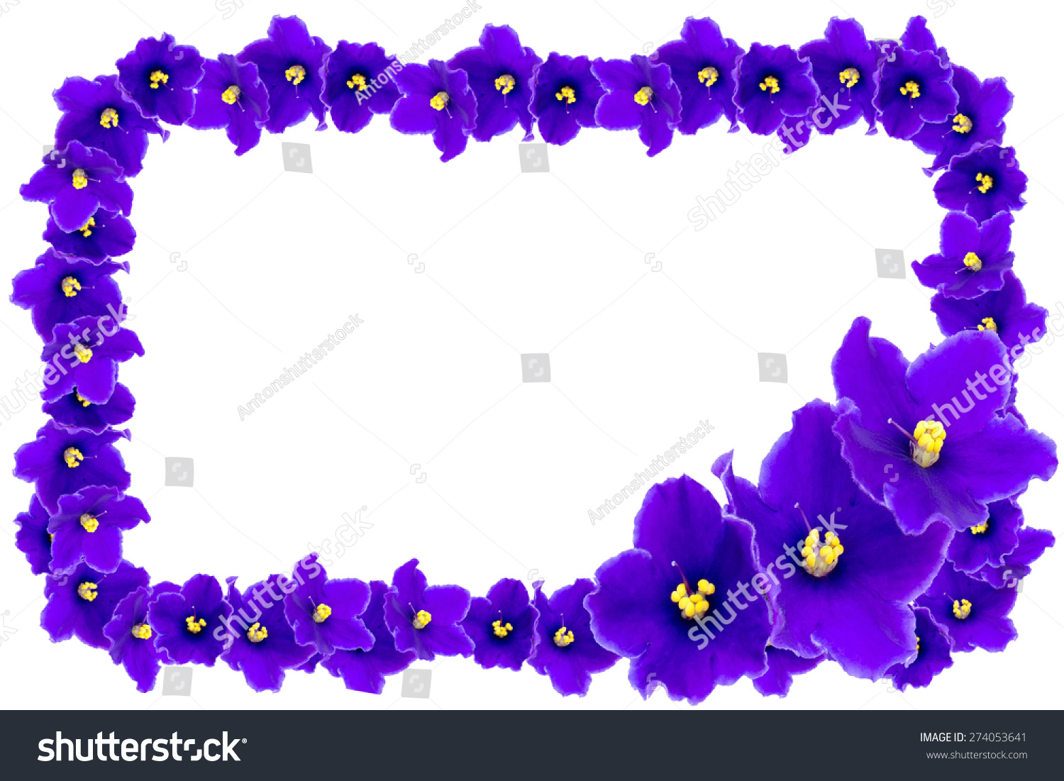 Beautiful Frame Purple Violets On White Stock Photo (Edit Now ...