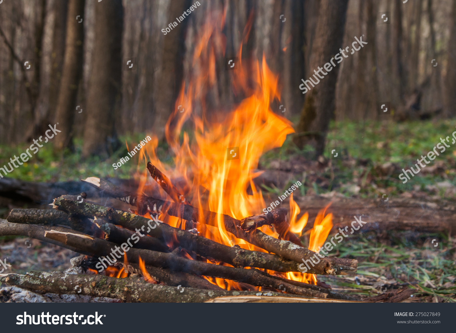 camp fire spring forest touristic view stock photo 275027849