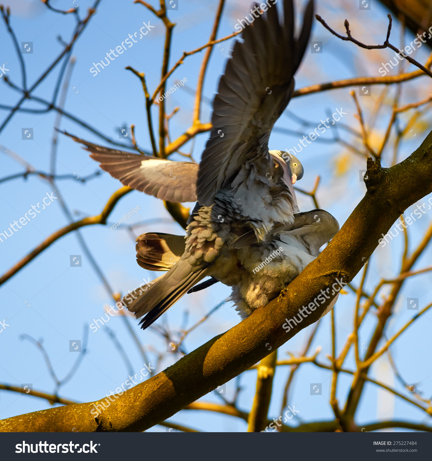 sexual intercourse photos bigfooty eagles
