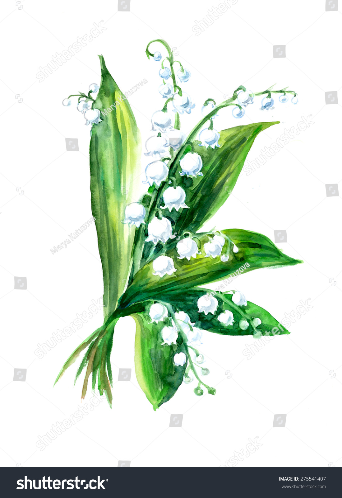 Lily valley bouquet greeting cards pattern stock illustration lily of the valley bouquet greeting cards pattern from white flowers watercolor hand izmirmasajfo Choice Image