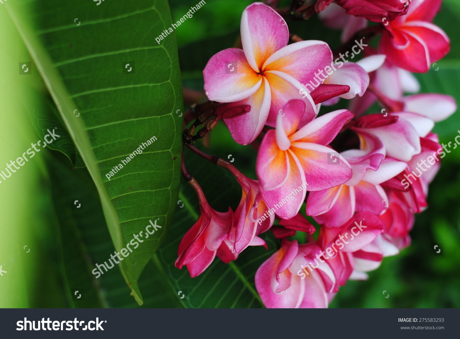 Flowers Pink Yellow Color Wall Green Stock Photo (Edit Now ...