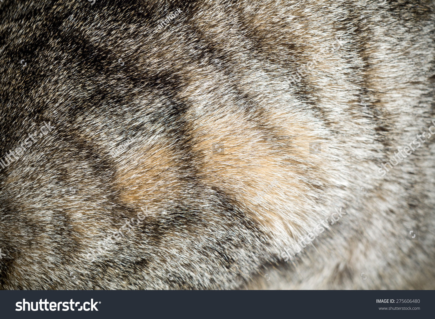 Color of cats fur - Close Up Image Of Cat Fur Grey Color With Black Stripes