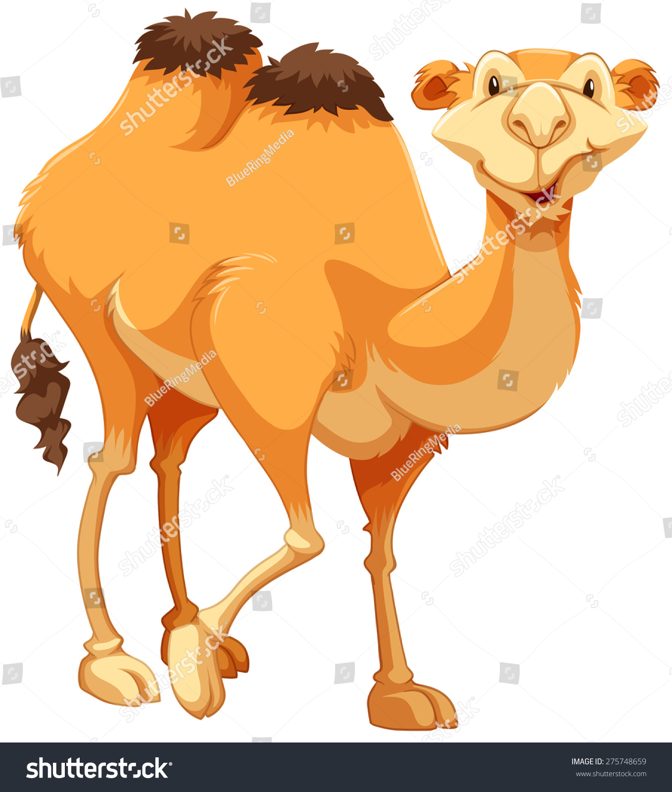 walking brown camel on white background stock vector 275748659